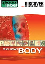 Discover The Human Body
